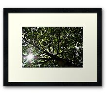 O Eco friendly..! Framed Print