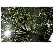 O Eco friendly..! Poster