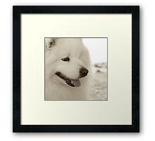 Sepia Samoyed Framed Print