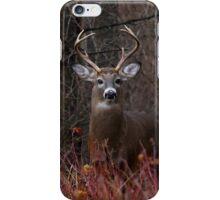 Buck Alert - iphone Case iPhone Case/Skin