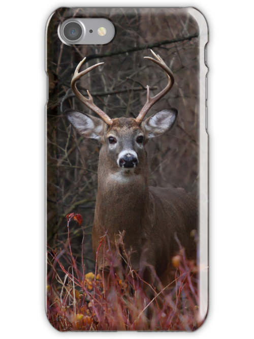 Buck Alert - iphone Case by Jim Cumming