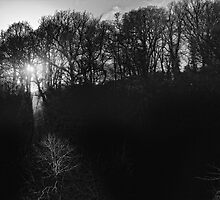 trees in light and silhouette, Graiguenamanagh, County Kilkenny, Ireland by Andrew Jones