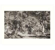 The Majesty of River Gums Art Print