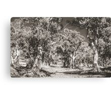 The Majesty of River Gums Canvas Print