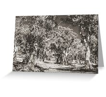 The Majesty of River Gums Greeting Card