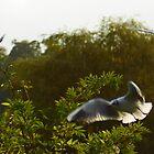 Gulls by CliveSluter