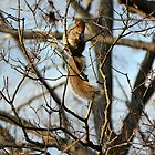 Chilly Squirrel by P.M. Franzen