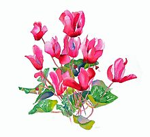 Cyclamen by Pat Yager