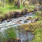 Wooroloo Brook - Gidgegannup by TonyCrehan