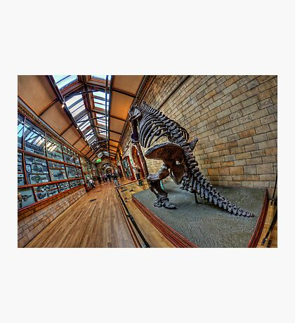 London - Natural History Museum II Photographic Print