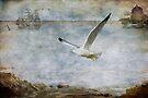 Coastal Flight by KBritt