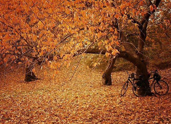 For Two - Autumn - Central Park - New York City by Vivienne Gucwa