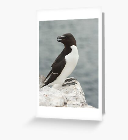 razor bill Greeting Card