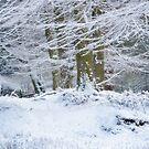 Snow Magic by Ann Garrett