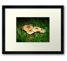 Pancake Mushrooms Framed Print