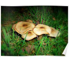 Pancake Mushrooms Poster