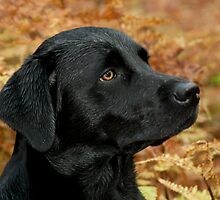 black lab by steven  renton