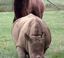 Camel & Rhino by Abigail Langridge