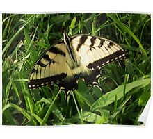 Yellow Swallowtail Poster