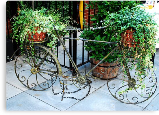 Bike planter by Kate Fortune