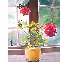 Watercolor, Geraniums at Gillthwaite Rigg, Windermere Photographic Print