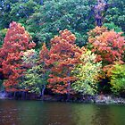 Fall Colors by wa7ial