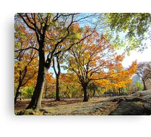 Gentle giants, Central Park - NYC Canvas Print