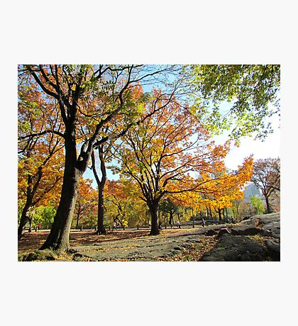Gentle giants, Central Park - NYC Photographic Print