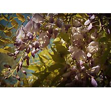 Sweet Smell of Spring Photographic Print