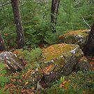 Silver Falls Forest by Dawne Olson