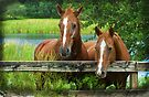 Two of a kind by Karen Peron