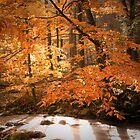 Orange by DChungaPhoto