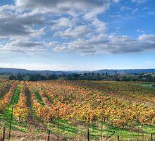 Vines in Fields by Agro Films