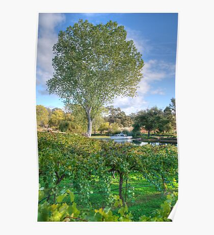 Vines And Trees Poster