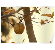 the unforbiden apple Poster