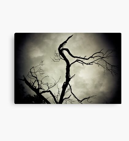 Black and White Tree Landscape. Canvas Print