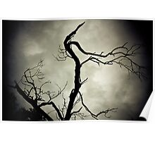 Black and White Tree Landscape. Poster