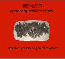 More Tribbles Photographic Print