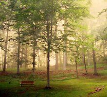 My Backyard by Deborah Crew-Johnson