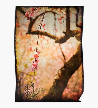 Cherry Tree Secret Garden Poster