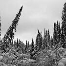 Deep Snow in the Woods by Dawne Olson