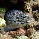 Moray Eel by tracyleephoto
