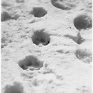 Dog tracks in the snow by jammingene