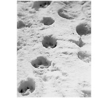 Dog tracks in the snow Photographic Print