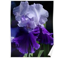 Mystique - Bearded Iris Poster
