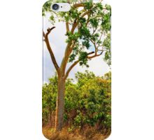 Eucalyptus Trees and Dry Grass iPhone Case/Skin