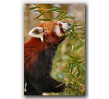 Zoo life Photographic Print
