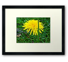 flower.. Framed Print