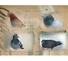 Pigeon Postcard - Love for Pigeons Photographic Print