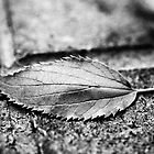 Black and white Autumn by DavidCucalon